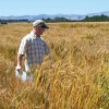 Growing SDSU wheat abroad