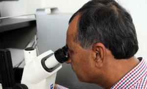 Here he takes a microscopic look at Fusarium head blight, also called wheat scab.
