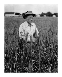 p10-McFaddenin-wheat-field