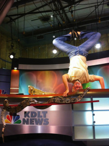 Stephanie Arne '05 does a headstand on the KDLT news desk in Sioux Falls, while Julius Squeezer, a red tailed boa, explores and Wiki, an iguana, just watches. The sociology grad is the new Wild Guide on Mutual of Omaha's Wild Kingdom. As Wild Guide for Wild Kingdom webisodes, Arne will connect with viewers using social media channels like Instagram and Facebook. Arne's Instagram followers consistently request handstand photos from wherever she is visiting most recently.