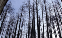 Wildfire management produces healthier forests