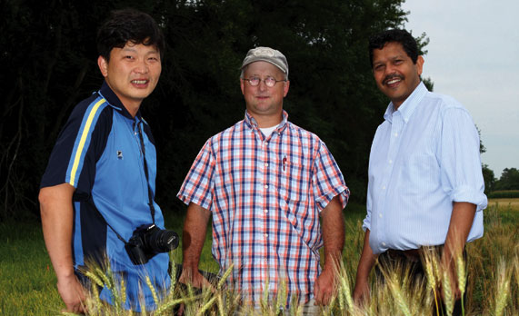 Visiting scientist Dea Wook Kim, left, from the National Institute of Crop Science in Suwon, South Korea, examines South Dakota wheat to unravel the genetics behind resistance to preharvest sprouting. Spring wheat breeder Karl Glover, center, supplies the wheat varieties and molecular biologist Jai Rohila provides the genetic expertise.